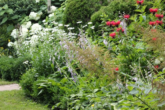 Blog Photo - Garden Tall flowers gone wild
