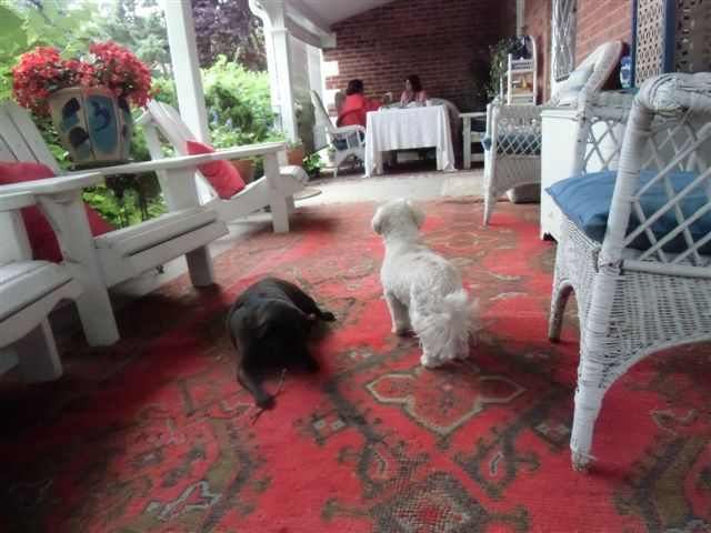 Blog Photo - Verandah - Dogs in Foregorund and Visitors in BG