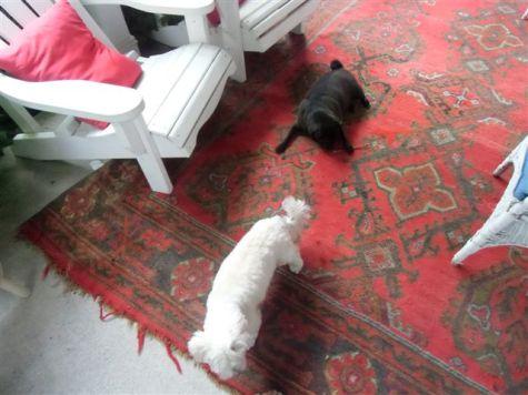 Blog Photo - Verandah - dogs on old rug