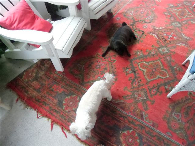 Blog Photo - Verandah - dogs on old rug