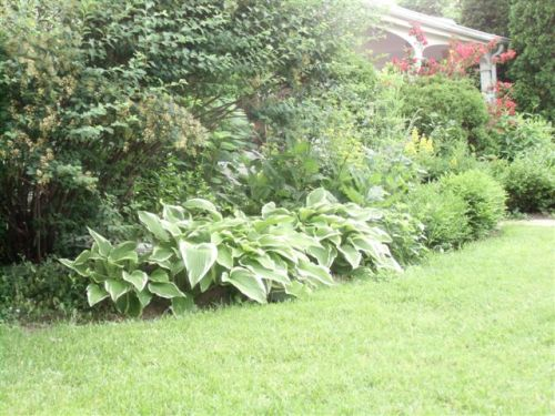Blog Photo - Verandah - Garden bed outside verandah