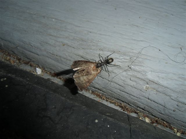 Blog Photo - Ant and Moth