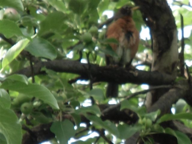 Blog Photo - Bird in tree