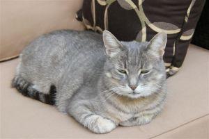 Blog Photo - Mary's Garden Cat