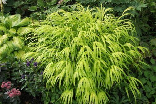 Blog Photo - Mary's Garden Japanese forest grass and hosta