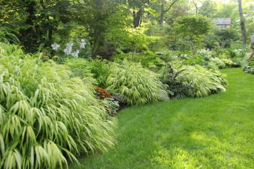 Blog Photo - Mary's Garden Japanese forest grass