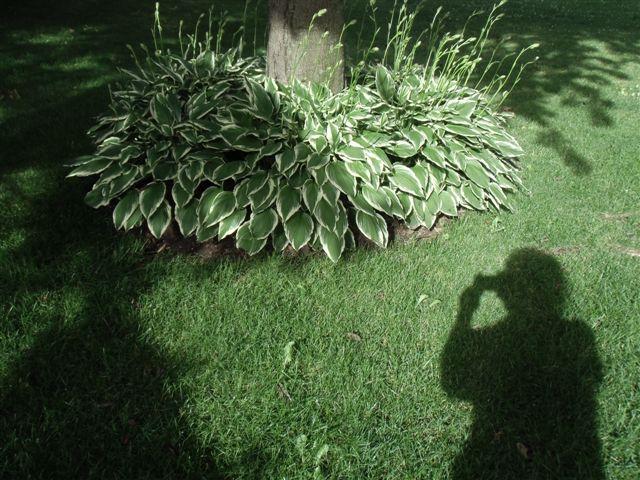 Blog Photo - Shadow takes photo