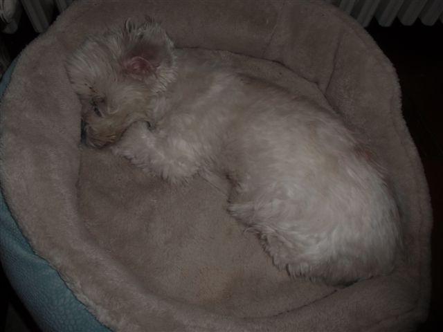 Blog Photo - Kitchen Dog Sleeps