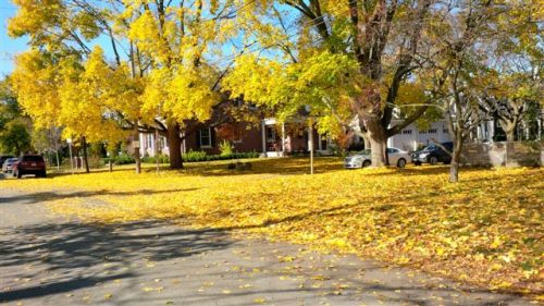 Blog Photo - Farmers Market Village Street and autumn leaves