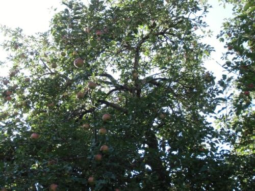 Blog Photo - Trees and Apples