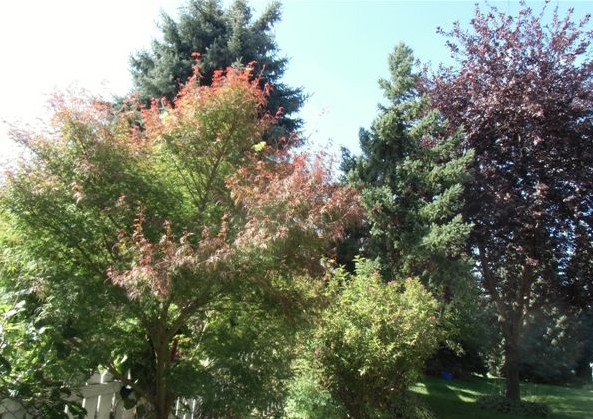 Blog Photo - Trees of Various kinds