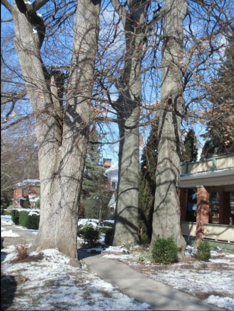 Blog Photo - Trees three trunks in autumn