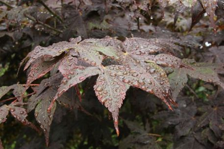 Blog Photo - New Year's Poem Maple Leaves