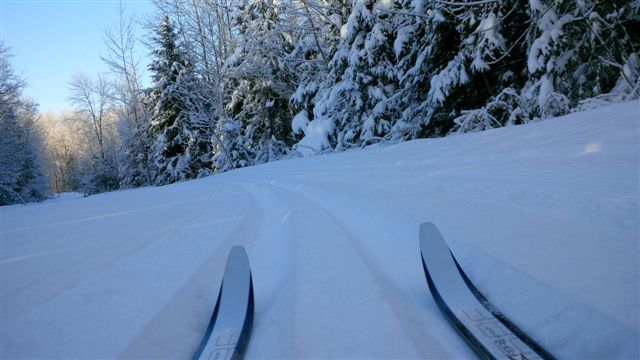 Blog Photo - New Year's Poem Skiis on Snow with Trees