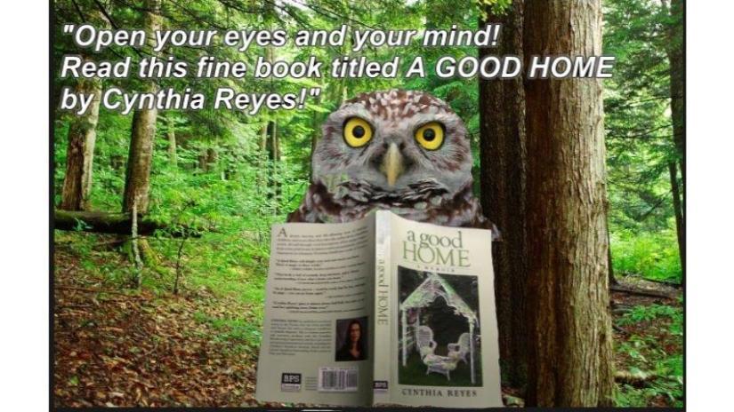 Blog Photo - Reader Philip's Owl Photo