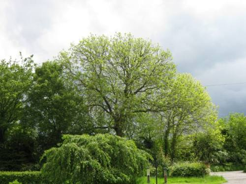 Blog Photo - Clare Pooley3 Trees