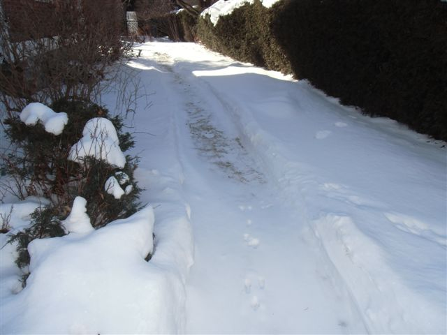 Blog Photo - Snowy path