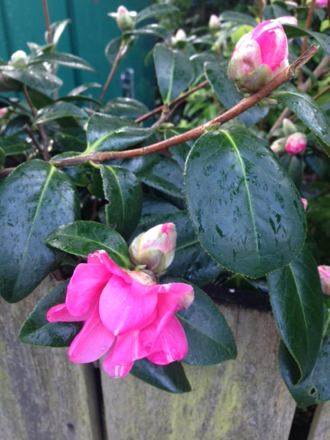 Blog Photo - Spring Rodos2