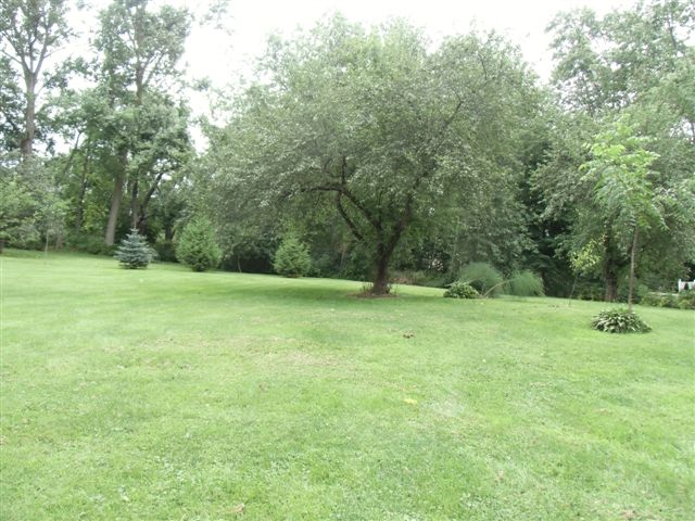 Blog Photo - Apple Tree and others