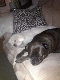 Blog Photo - Julius and Dawson Sleeping
