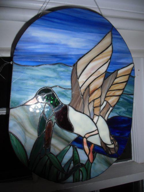 Mallard on Wing