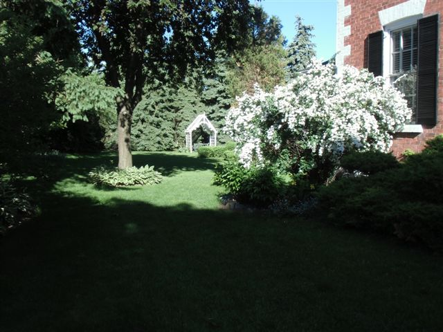 Blog Photo - Tree and Shady Garden
