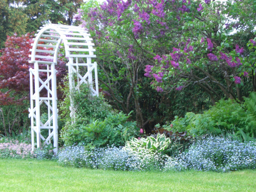 Blog Photo - Lilacs and forget Me Nots