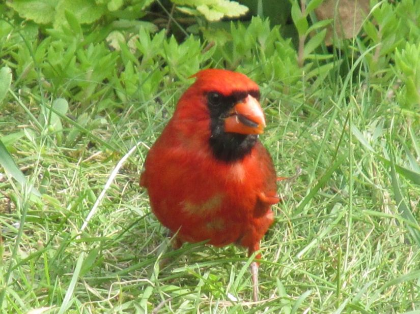 Blog Photo - Afternoon Tea Cardinal 2