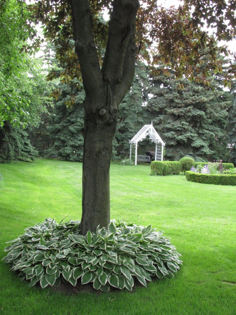 Blog Photo - Afternoon Tea garden with hosta and tree