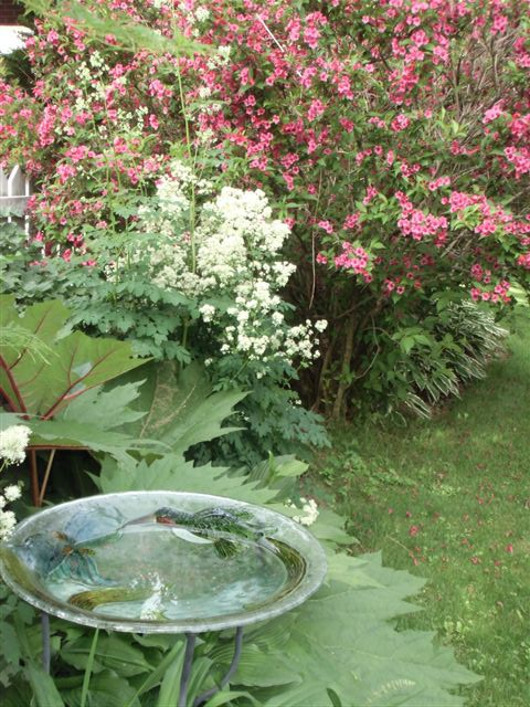 Blog Photo - Garden birdbath and blooms