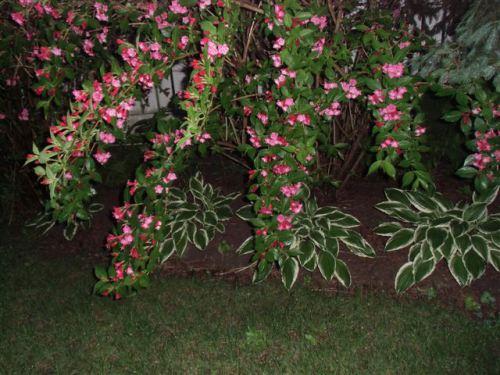 Blog Photo - Rainy Branches over Hosta