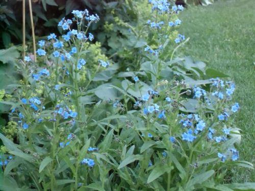 Blog Photo - Blue No-Name