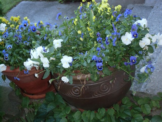 Blog Photo - Pansies on ledge