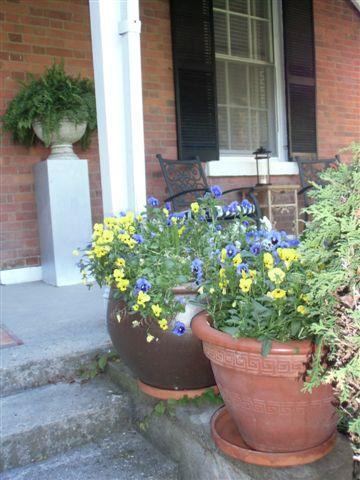 Blog Photo - Pansies on verandah - two pots