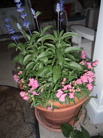 Blog Photo - Potted plants - one pot