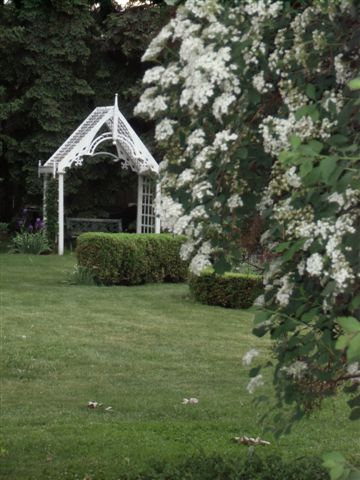 Blog Photo - White garden Bridal Wreath and Arbour