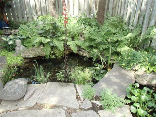 Blog Photo - Gail's Garden  Pond closer shot