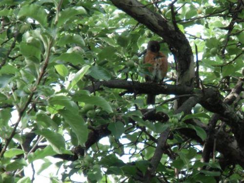 Blog Photo - Bird Scratches self