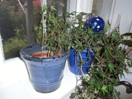 Blog Photo - Kitchen plants on window sill