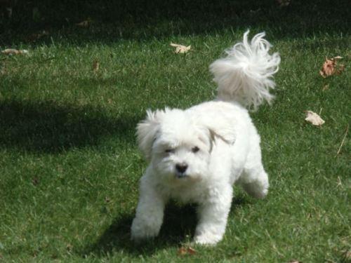 Blog Photo - Doggie Runs