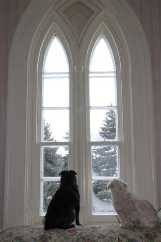 Blog Photo - Doggies in window