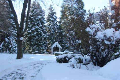 Blog Photo - Winter Garden