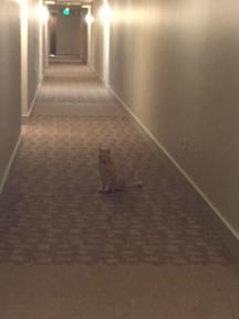 Blog Photo - Jerry camouflaged on carpet