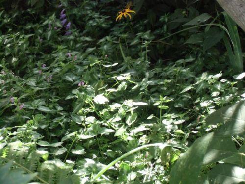 Blog Photo - Garden short plants