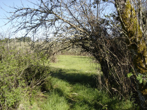 Blog Photo Lavinia and Rick story old apple tree and tunnel