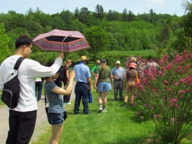 Blog Photo - Lilac Festival in Warkworth