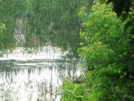 Blog Photo - Yvonne wetlands2