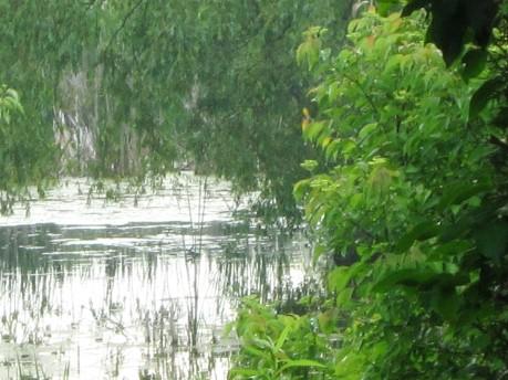 Blog Photo - Yvonne wetlands2