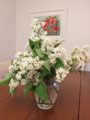 Blog Photo - Garden White Lilac Flowers in Vase