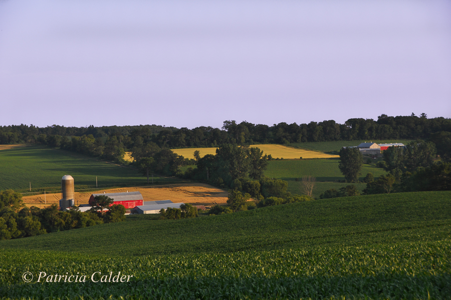 SOTH - Patricia Calder Farm Country